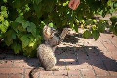 Gatito que juega con la pluma en la yarda fotografía de archivo libre de regalías