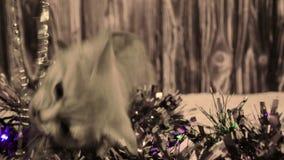 Gatito que juega con las decoraciones de la Navidad metrajes