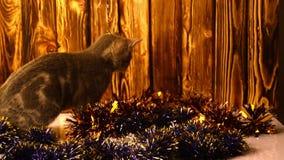 Gatito que juega con las decoraciones de la Navidad almacen de metraje de vídeo