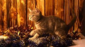 Gatito que juega con las decoraciones de la Navidad almacen de video