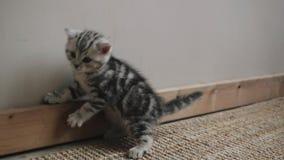 Gatito que juega con un arco almacen de video