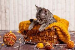 Gatito que juega con una bola de lanas Fotografía de archivo libre de regalías