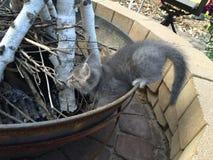 Gatito que juega en el hoyo del fuego imagenes de archivo
