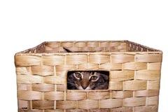 Gatito que juega en una cesta Fotos de archivo