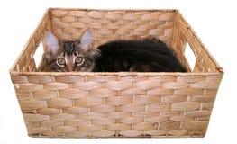 Gatito que juega en una cesta fotografía de archivo