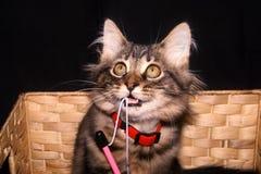 Gatito que juega en una cesta imagen de archivo