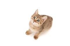 Gatito que miente en el piso y que parece para arriba aislado Foto de archivo