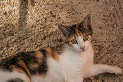 Gatito que miente en la arena en una granja imágenes de archivo libres de regalías