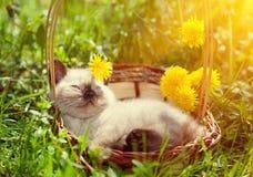Gatito que miente en una cesta Foto de archivo