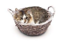 Gatito que miente en una cesta en un fondo blanco Imagenes de archivo