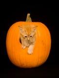 Gatito que mira a escondidas de la calabaza fotografía de archivo libre de regalías