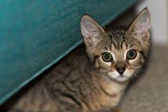 Gatito que mira la cámara fotos de archivo libres de regalías