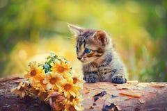 Gatito que mira las flores Foto de archivo libre de regalías