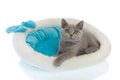 Gatito que mira para arriba Foto de archivo libre de regalías