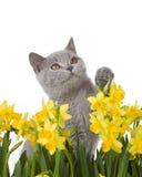 Gatito que mira para arriba Fotos de archivo libres de regalías