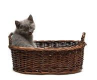 Gatito que muestra la lengüeta Imágenes de archivo libres de regalías