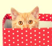 Gatito que oculta en una caja Imagen de archivo libre de regalías