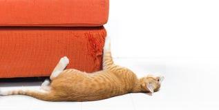 Gatito que rasguña el sofá de la tela Fotos de archivo
