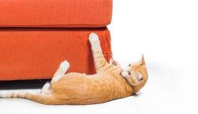 Gatito que rasguña el sofá de la tela Fotografía de archivo libre de regalías