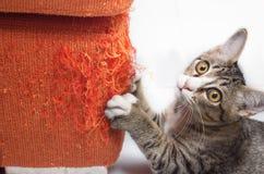 Gatito que rasguña el sofá de la tela Foto de archivo libre de regalías
