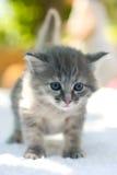 Gatito que recorre Imagen de archivo libre de regalías