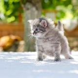 Gatito que recorre Foto de archivo libre de regalías