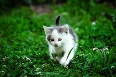 Gatito que recorre Imagenes de archivo