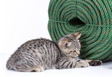 Gatito que se agacha cerca de una bobina grande de la cuerda verde Foto de archivo