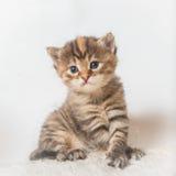 Gatito que se sienta Fotografía de archivo libre de regalías