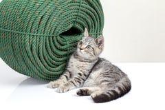 Gatito que se sienta al lado de cuerda verde grande Imagen de archivo libre de regalías