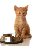 Gatito que se sienta al lado del tazón de fuente del alimento Imagen de archivo libre de regalías