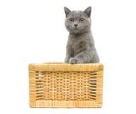 Gatito que se sienta en cesta en un fondo blanco Fotos de archivo libres de regalías