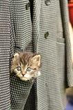 Gatito que se sienta en el bolsillo Imagen de archivo libre de regalías