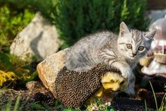 Gatito que se sienta en erizo artificial Fotografía de archivo