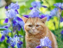 Gatito que se sienta en flores del iris en el jard?n foto de archivo libre de regalías
