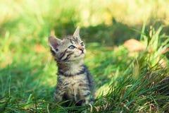 gatito que se sienta en la hierba Imágenes de archivo libres de regalías
