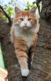 Gatito que se sienta en un árbol Fotografía de archivo