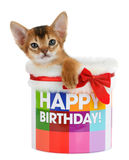Gatito que se sienta en un cubo del feliz cumpleaños Fotos de archivo libres de regalías