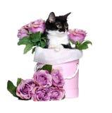 Gatito que se sienta en una caja con las flores aisladas en el backgroun blanco Fotografía de archivo