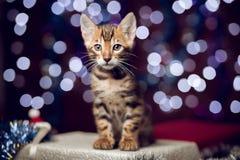 Gatito que se sienta en una caja de regalo con el fondo del bokeh Imagen de archivo libre de regalías
