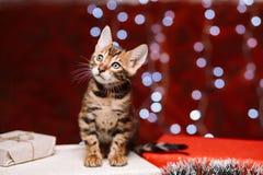 Gatito que se sienta en una caja de regalo con el fondo del bokeh Foto de archivo