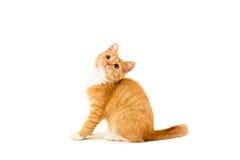 Gatito que se sienta rojo foto de archivo libre de regalías