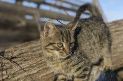 Gatito que sube abajo el tronco de árbol Imagen de archivo libre de regalías