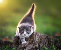 Gatito que sube en tocón fotos de archivo