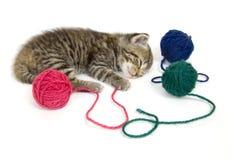 Gatito que toma una siesta en el fondo blanco Imagenes de archivo