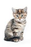 Gatito rayado Foto de archivo