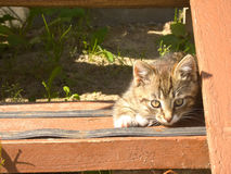 Gatito rayado divertido Fotos de archivo libres de regalías