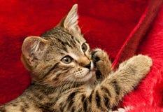 Gatito rayado en rojo Imágenes de archivo libres de regalías