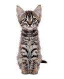Gatito rayado gris con una mueca sorprendida Fotos de archivo libres de regalías