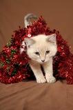 Gatito realmente lindo 4 de la Navidad Imagen de archivo